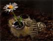 הפרח האחרון