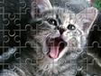 משחק פאזל חתולים