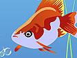 באבלס דגים
