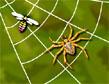 משחק רשת העכביש