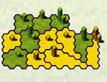 כיבוש קובייתי