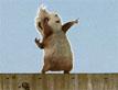 כוח G: קפיצת גגות