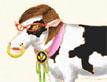 שבע פרות שמנות