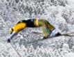 משחק קפיצת סקי