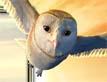 אגדה עם כנפיים: עפים רחוק